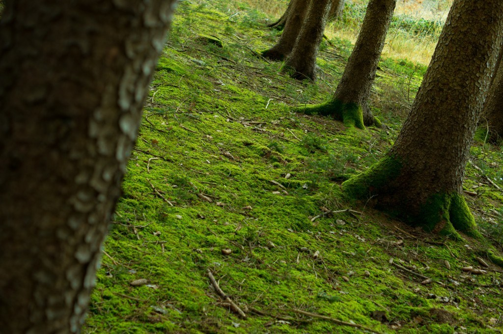 How To Get Rid Of Moss Naturally