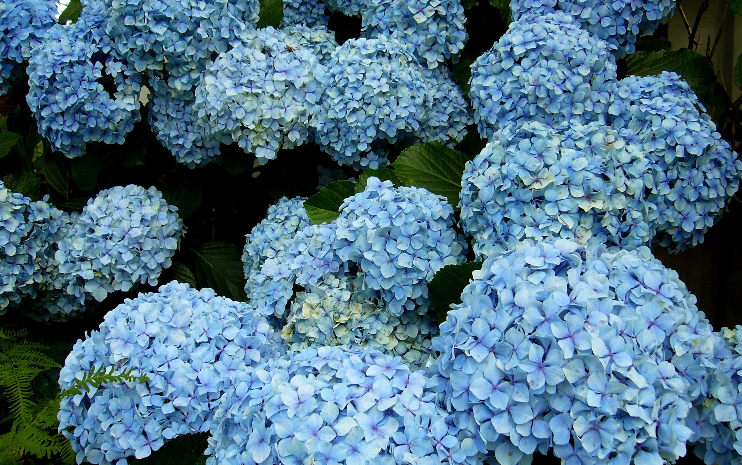 Spring flowering beauty from full round heads of purple and blue flowers to pink white and mottled varieties izmirmasajfo