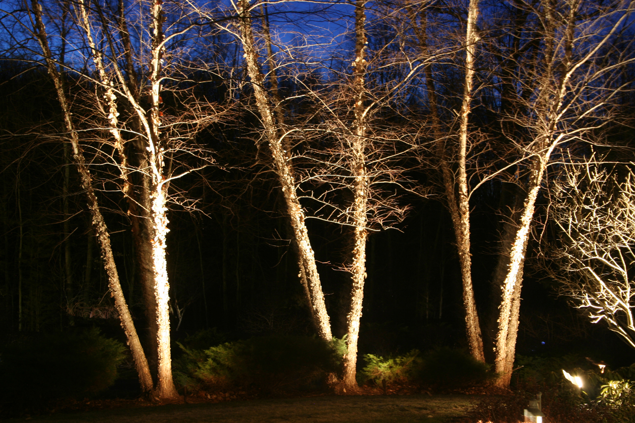 Low Voltage Landscape Lighting For Trees : Lighting frontier landscaping