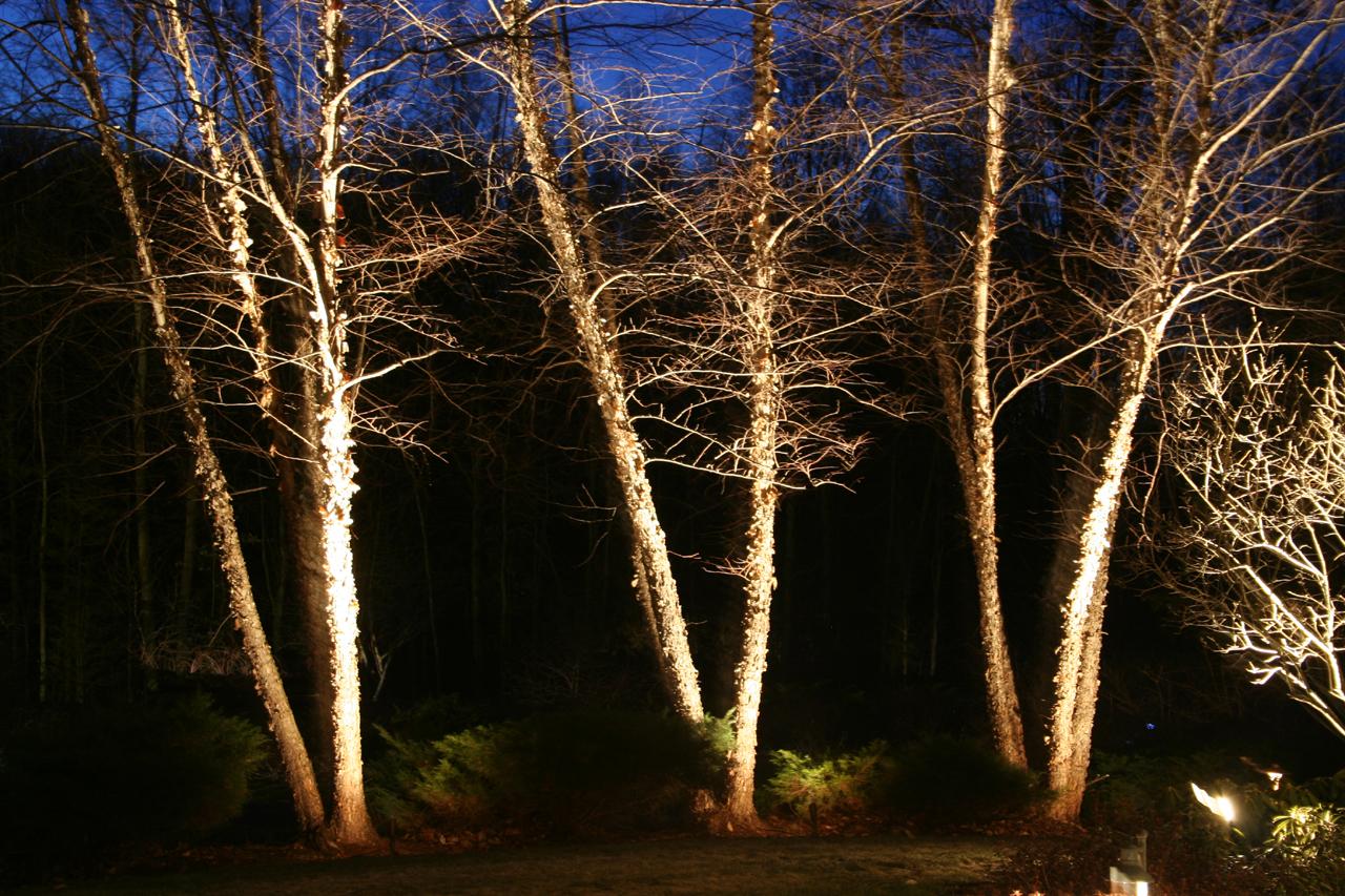 Spotlight Trees