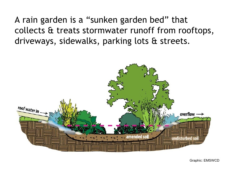 Is A Rain Garden Right For You? Rain Garden Design Wa State on rain art drawings, rain gutter downspout design, dry well design, rain roses, rain water design, french drain design, rain construction, rain illustration, rain barrels, gasification design, bioswale design, rain gardens 101, rain harvesting system design,