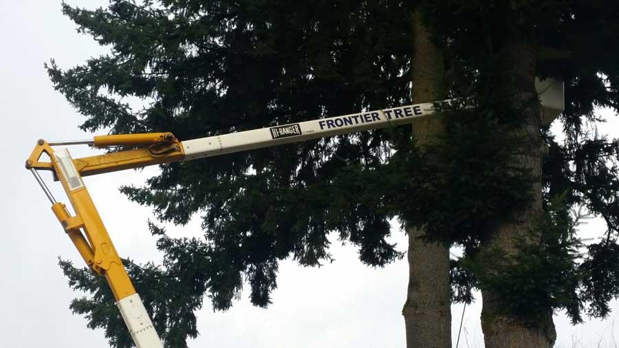 tree service crane treetop