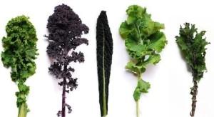 kale types (2)
