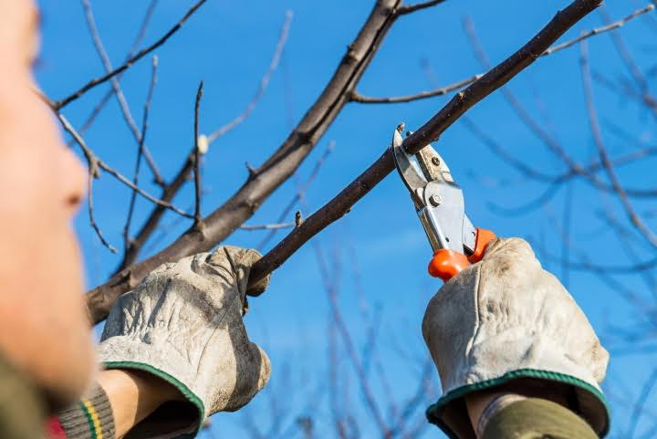 Why Winter Pruning is Essential to Fine Gardening